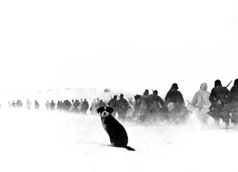 A dog sits in the snow watching a column of Axis Italian soldiers of the 8th Italian Army, also known as the Italian Army in Russia