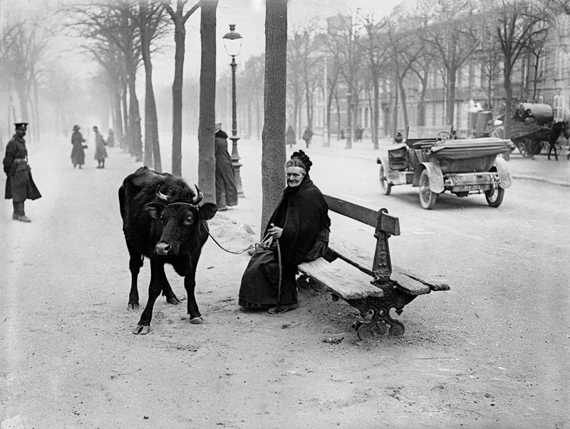 An old woman who fled the warzone with her cow, sits on a bench in Amiens, France, 28th March 1918