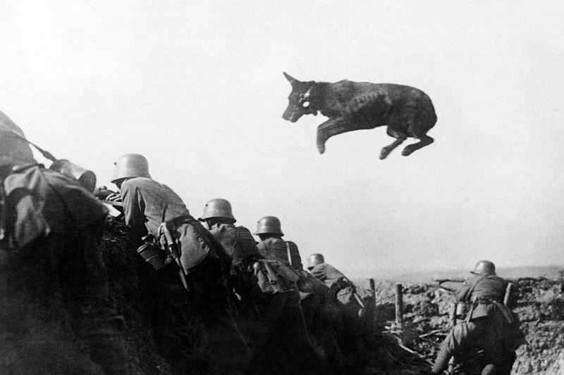 A German dispatch dog carries messages to the front line during a German offensive in January 1918
