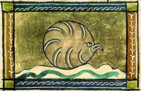 In the mind of a medieval illuminator, this is an oyster .