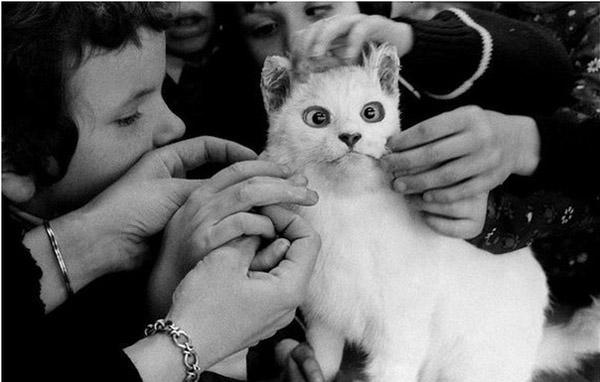 Слепые дети изучают кошку, 1981