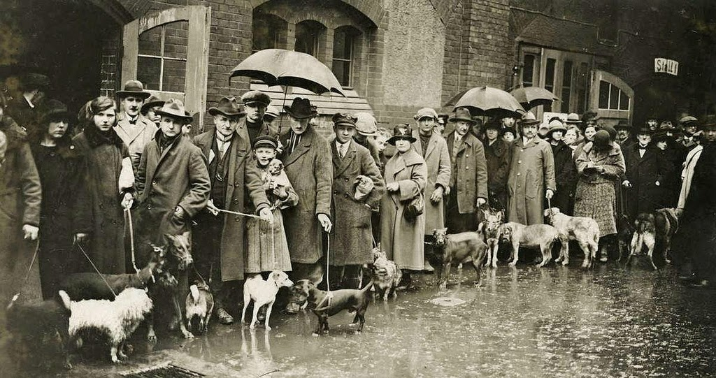 People bringing their dogs for destruction, because they can not pay the raised dogs tax, Berlin, 1926