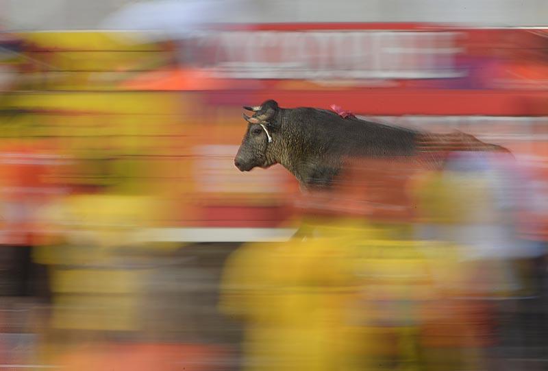 bullfighting_5