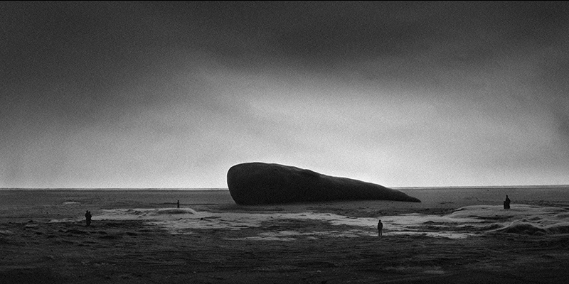 Tom Callemin, Whale, 2014