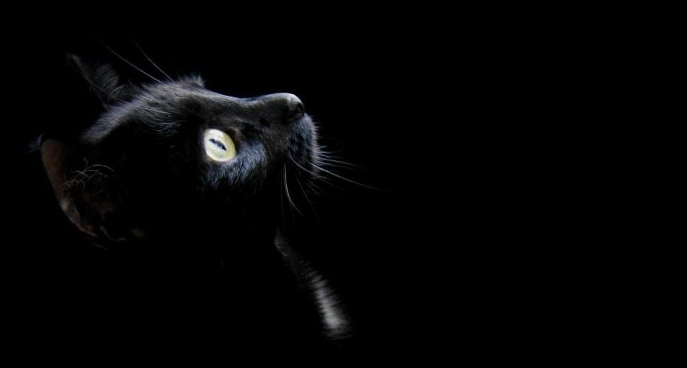 обои на рабочий стол черный кот на черном фоне № 204134  скачать