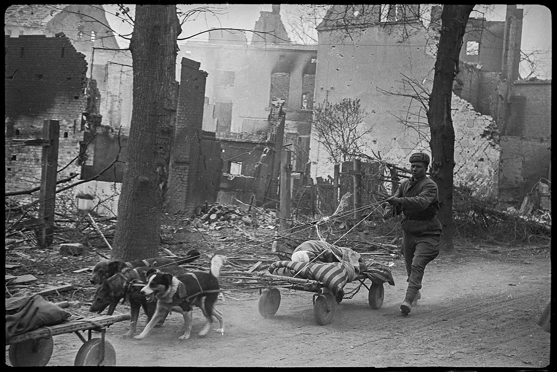 Снимки военного фотографа Валерия Фаминского