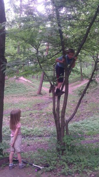 миша на дереве