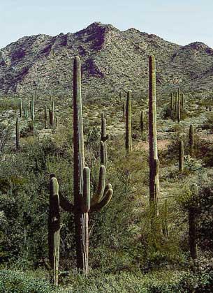 Пустыня Сонора, где дон Хуан обучал К.Кастанеду магическому