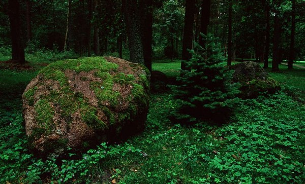 Лесные камни