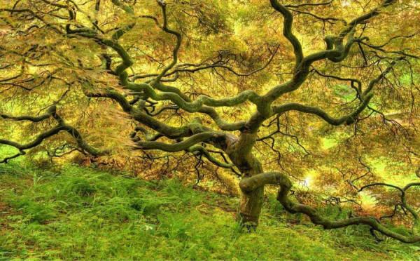 Дерево в аномальной зоне