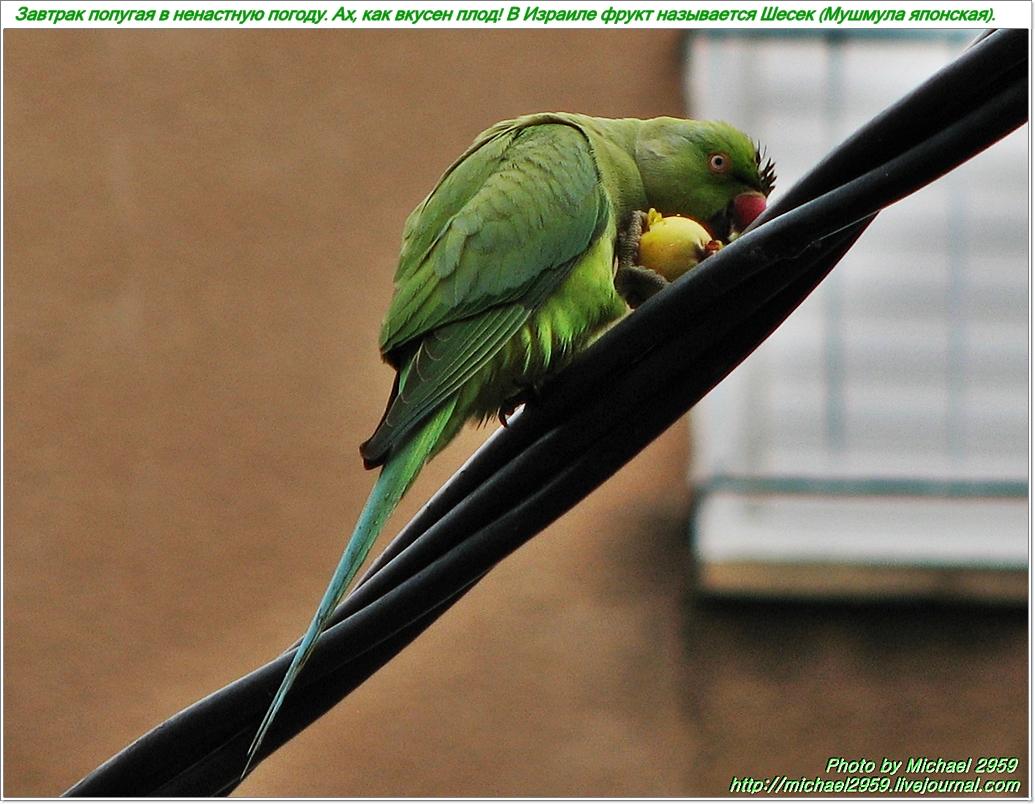 Завтрак Попугая