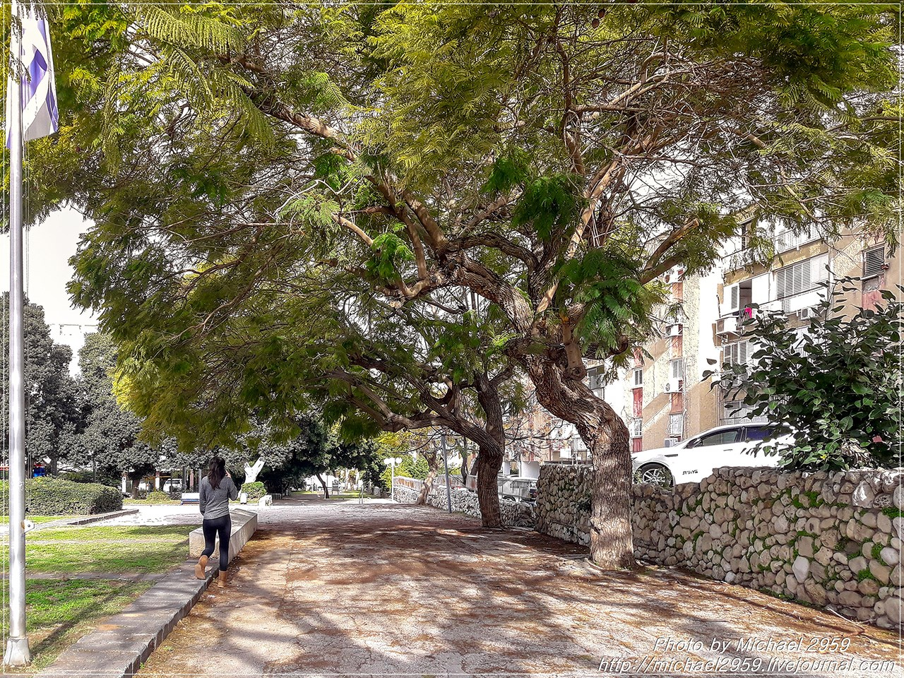 деревья израиля фото с названиями данной статьей, узнаете