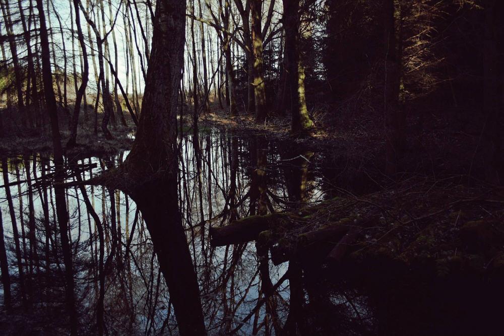 Black Autumn_wall6_n