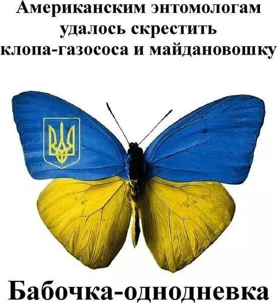 Насекомое Украина