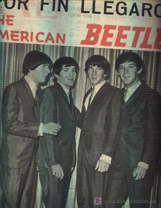 zz American Beetles_