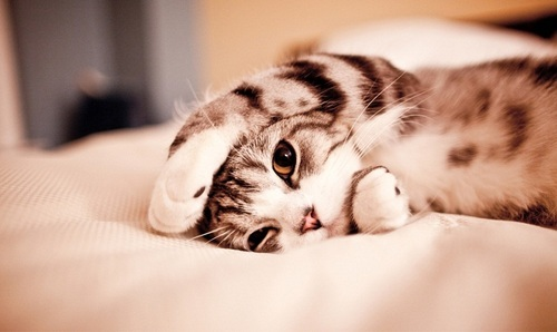 cat-cute-eyes-fluffy-kitten-Favim.com-282209