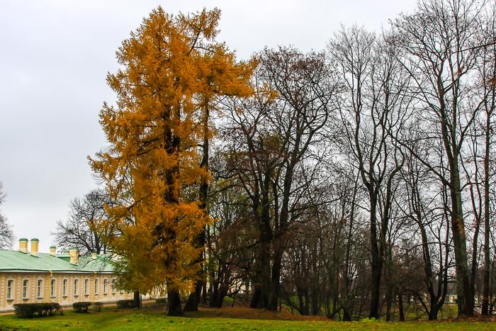 oranienbaum-0052