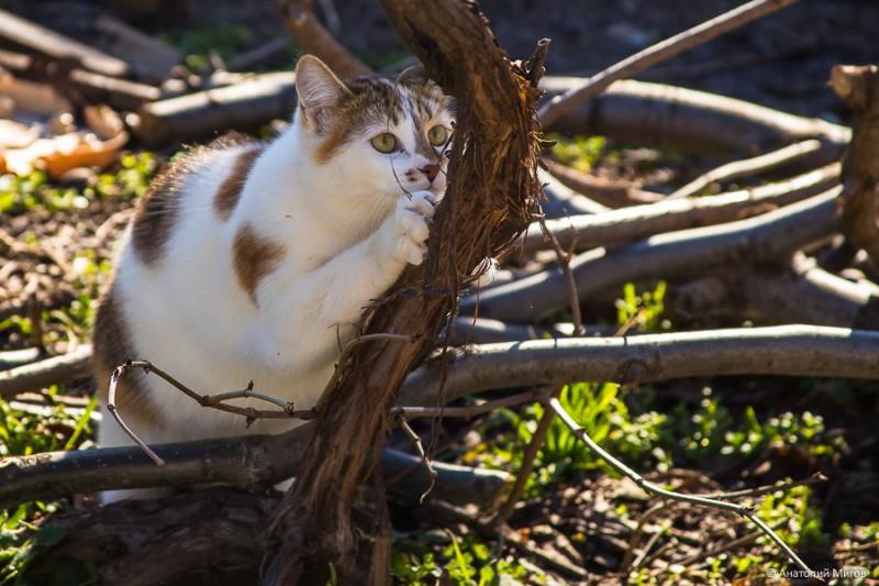 cat-1190.jpg