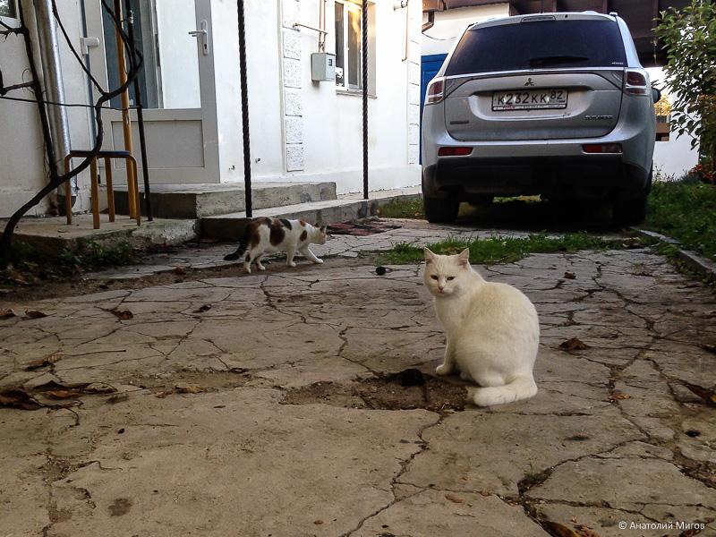 Один осенний день простого крымского пенсионера