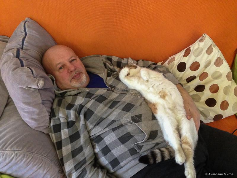 Дом, диван, книжка, кошка
