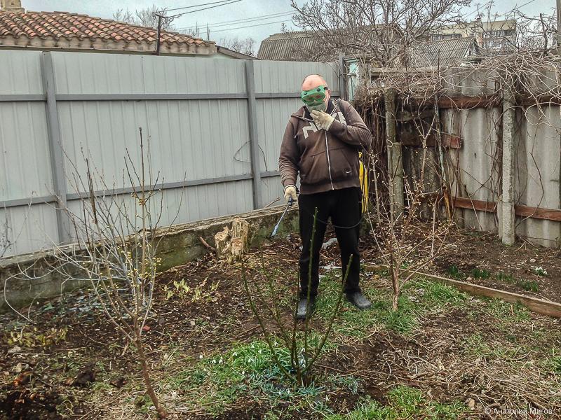 Опрыскал деревья, виноград и розы - это значит, в Крыму весна