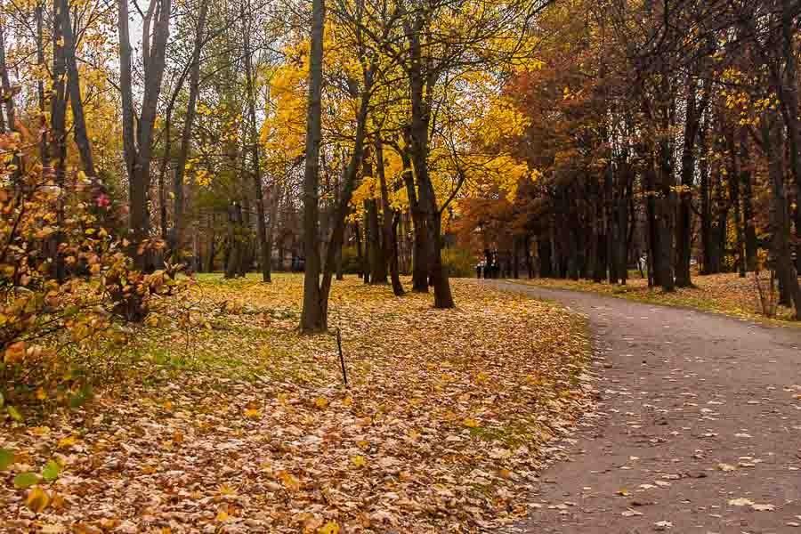 oranienbaum-autumn-0040