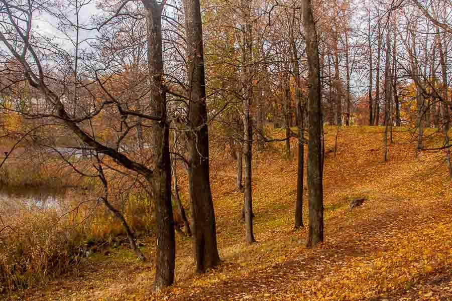 oranienbaum-autumn-0042