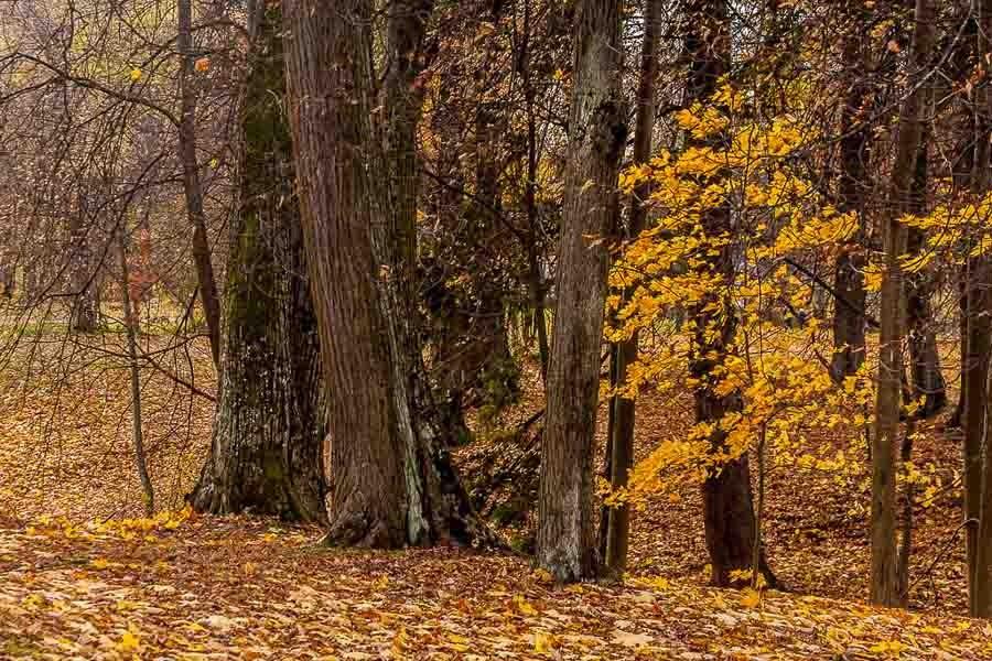 oranienbaum-autumn-0045
