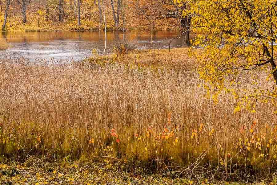 oranienbaum-autumn-0072