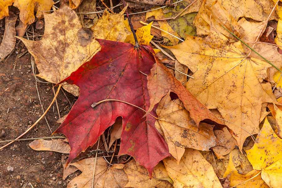 oranienbaum-autumn-0076