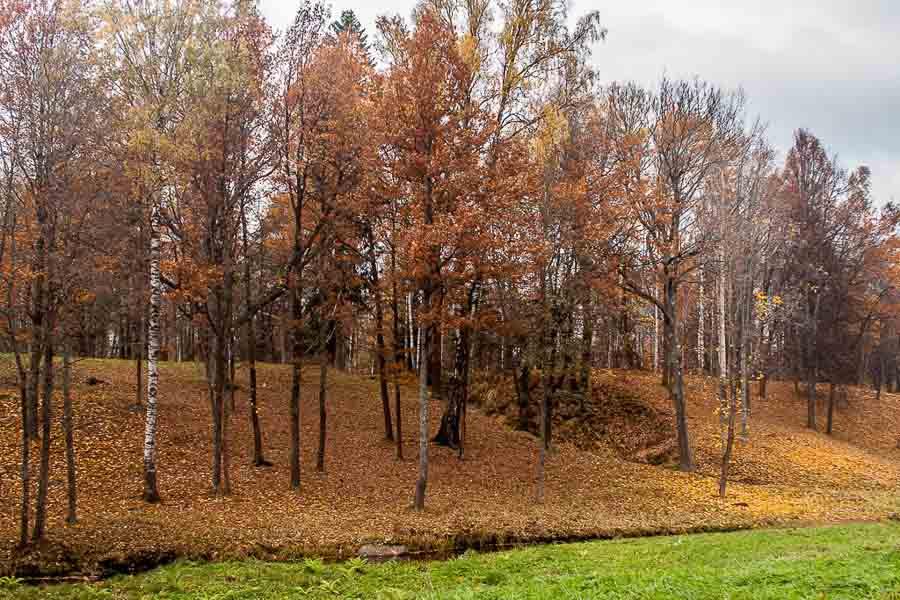 oranienbaum-autumn-0122