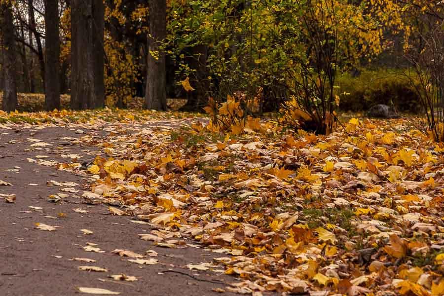 oranienbaum-autumn-0144