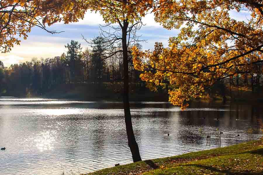 oranienbaum-autumn-0288