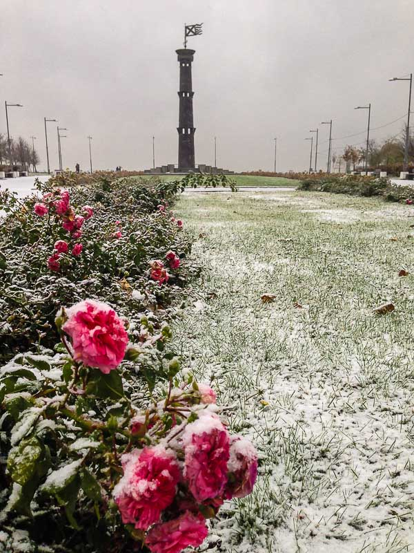 snow-2409