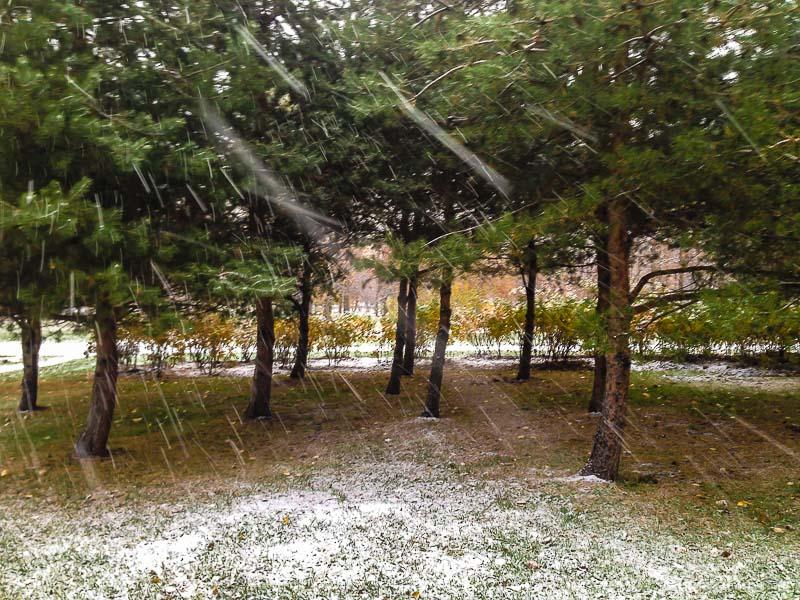 snow-2442