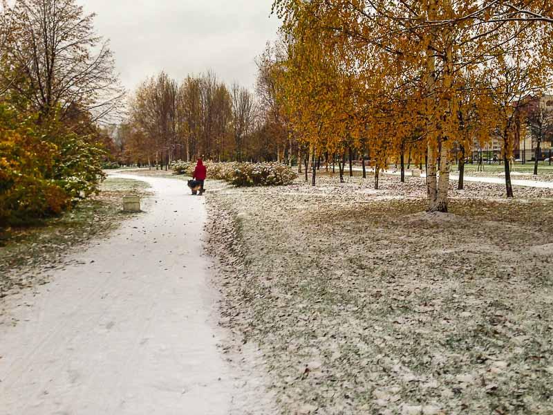 snow-2485