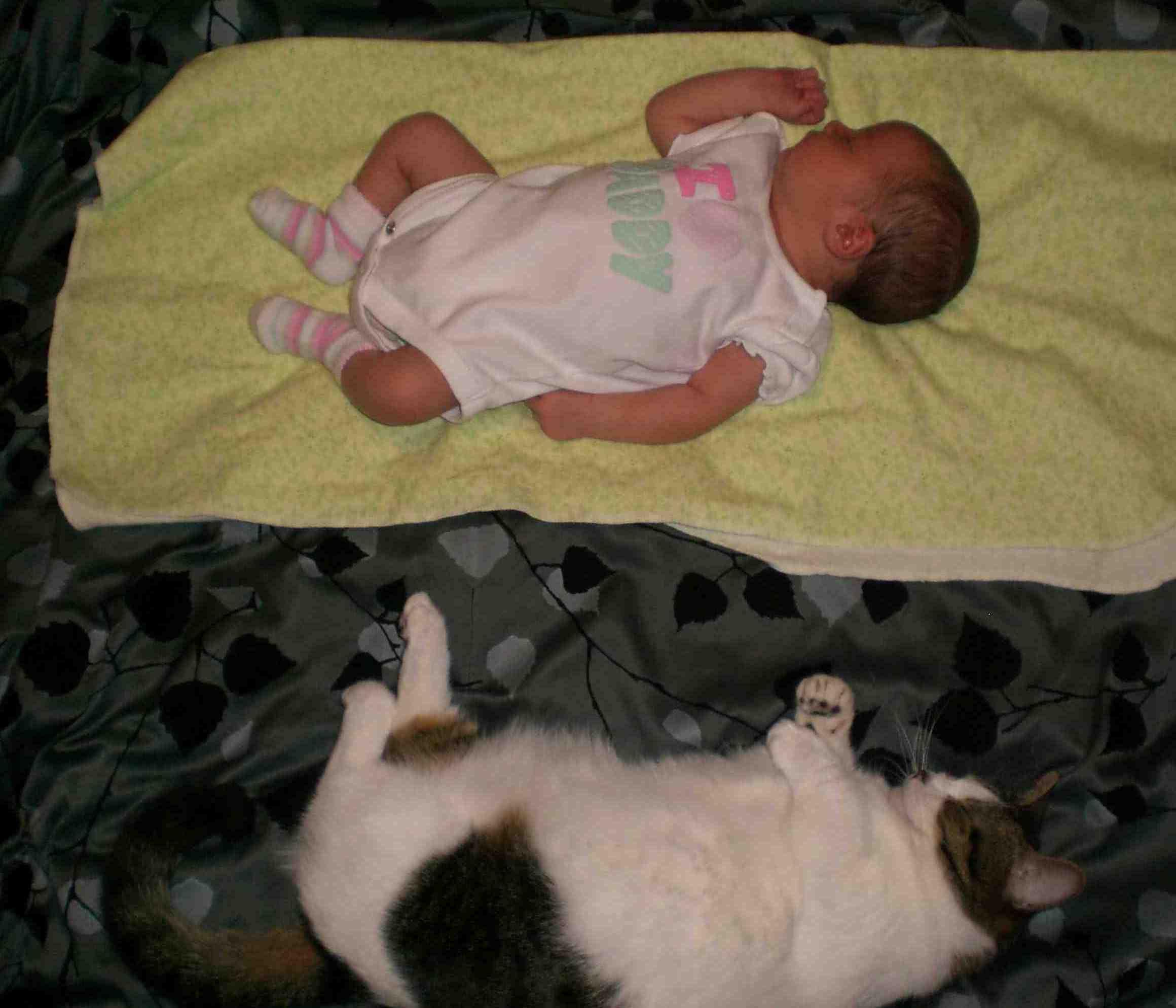 Baby Munchkin Cat