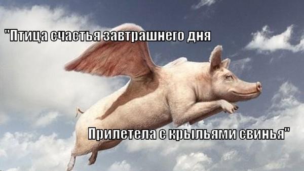 прилетела с крыльями свинья