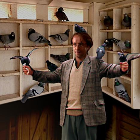 Zelenka in loft covered by pigeons