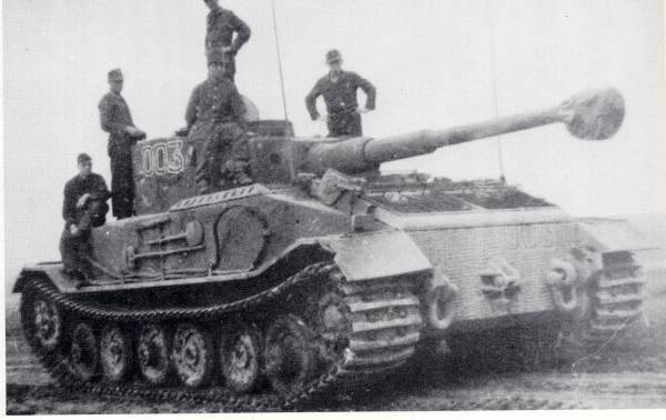 TigerP003653e