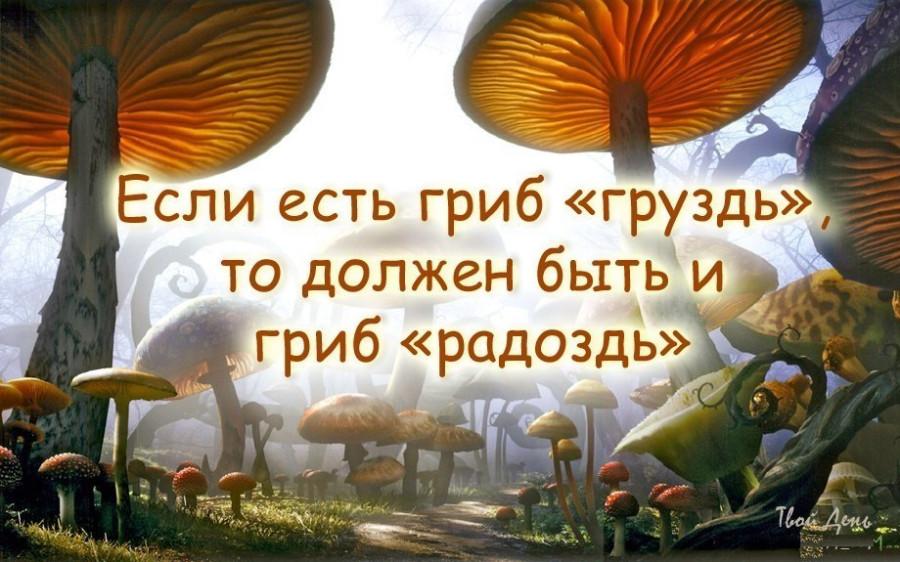 Смешные картинки по грибы