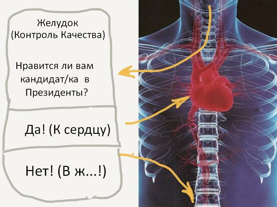 V_zh.jpg