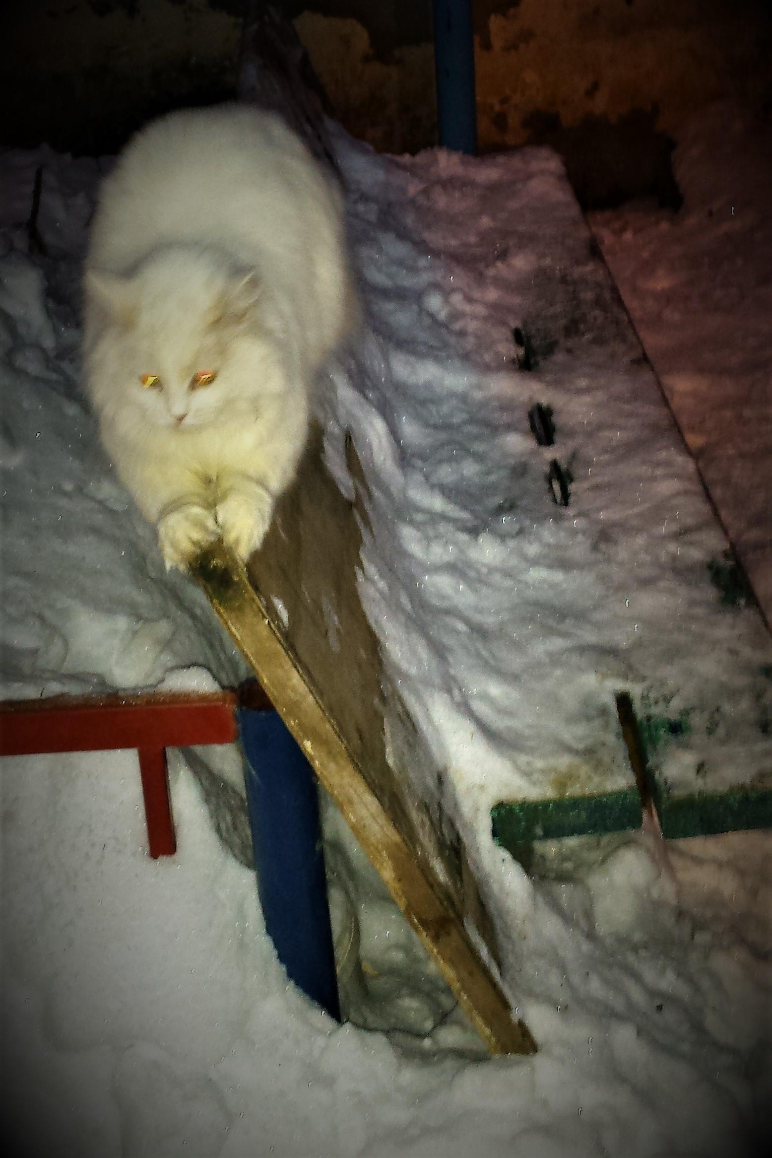 Зимняя встреча с кошкой Лизой