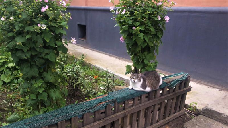 Любят кошки лазить по забору. А здесь, идеальное место.