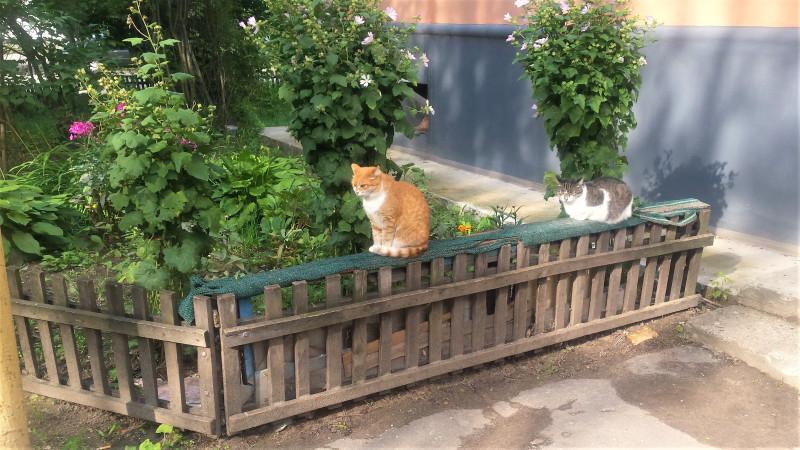Теперь здесь два кота (или кошки).