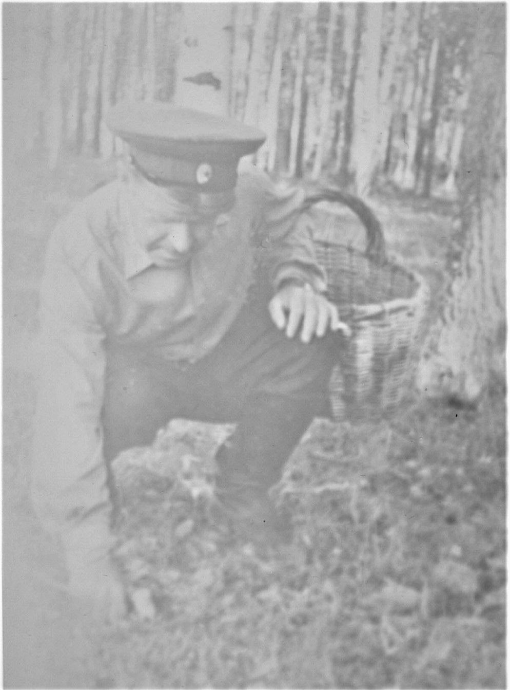 Отец собирает грибы в шуйских лесах