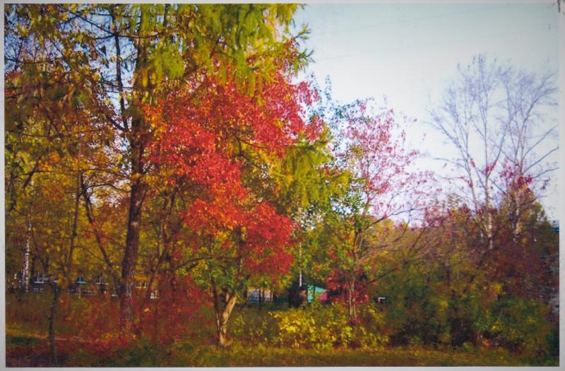 3.За деревьями прячется детский садик.