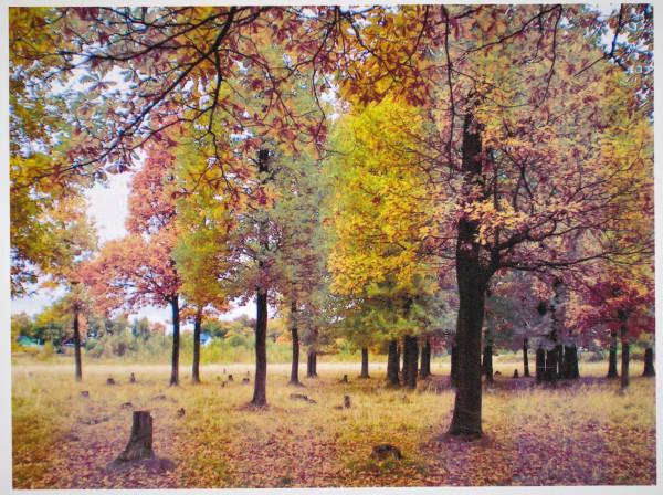 А за лесом — деревенька