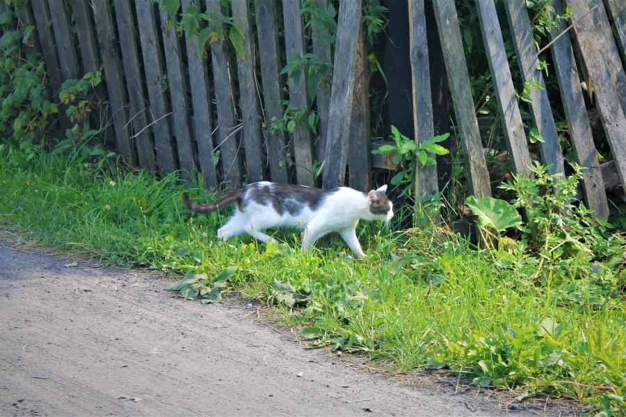 Кошечка гуляет.