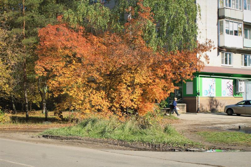 Золотая осень на моей улице.